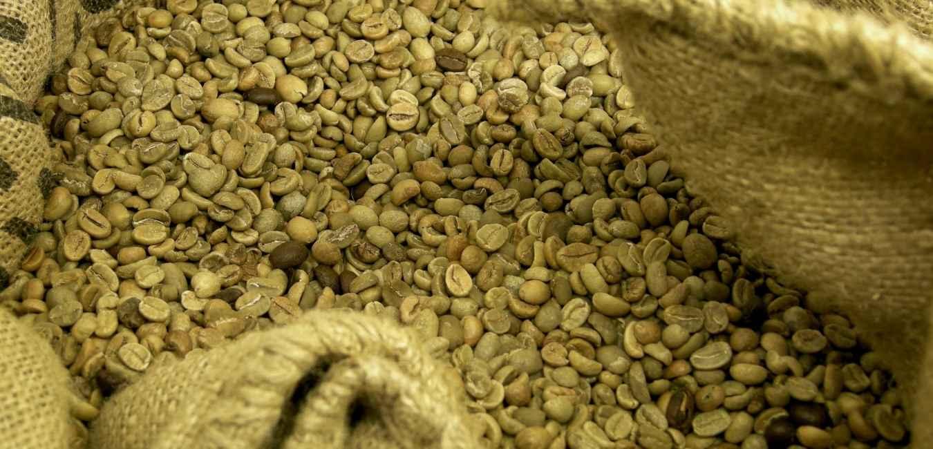 コーヒー 生豆